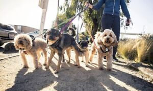 Dog Walking Services Available. Boarding/Daycare/Walking