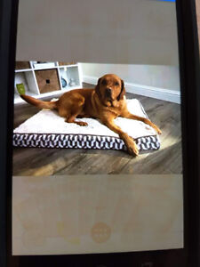 Orthopedic Deluxe  Pet Bed Sterling Deluxe  Brand New $60