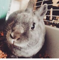 1 year old bunny for sale