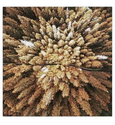 """P573 HEINE Glasbild """"Herbstwald"""" 80x80 cm """"natur/orange"""" UVP:89,99 €"""