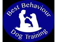 Puppy & Dog Training Ipswich