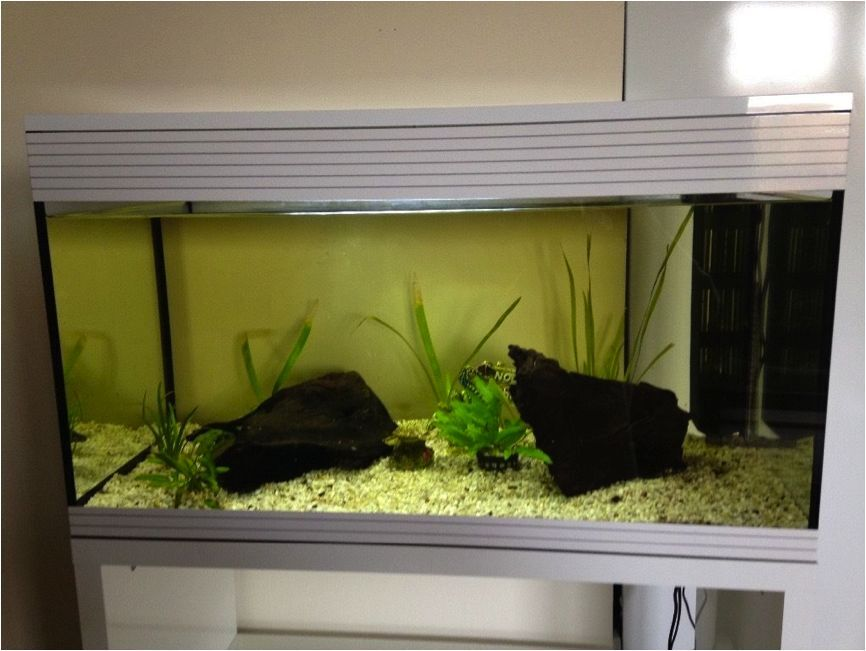 askoll pure xl 94 litre fish tank 100 in lewes east sussex gumtree. Black Bedroom Furniture Sets. Home Design Ideas