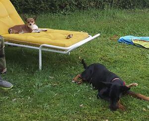 Logement - Loft avec chiens ***n'aboient pas