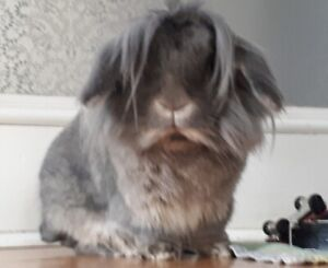 House Trained Bunny
