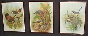 Lot of 11 Fauna study prints Wattle Grove Liverpool Area Preview