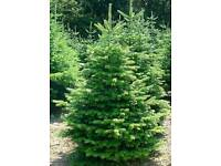 Christmas Trees Stands