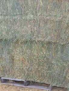 8x4x3 Lucerne HAY FOR SALE big square bale Horse quality Moss Val Moss Vale Bowral Area Preview