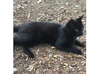 Missing small black cat