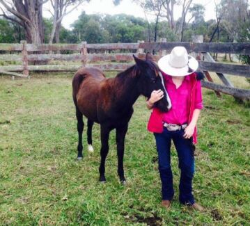 Paint x Appaloosa filly 1 years old