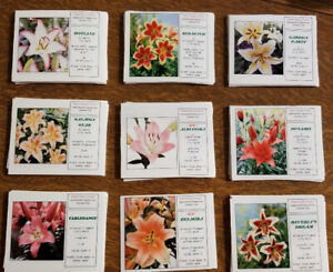 Lily bulbs for sale