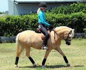 Genuine Kids Pony- Talented, stunning and Quiet! Alberton Gold Coast North Preview