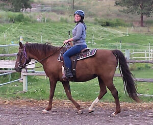 Riding and horsemanship lessons