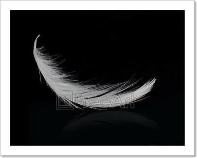 Flying White Feather On Black Art Print Home Decor Wall Art Poster - D](Feather Wall Art)