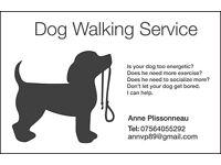Dog Walker / Walking Service in W11,W10 and W2