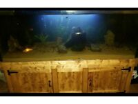 5ft by 2ft by 2ft fish tank an custom made wooden stand, heater, led lights airpump, sand/gravel ect