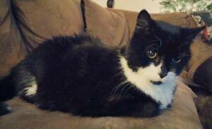 Elder Cat In Need of Home!!!