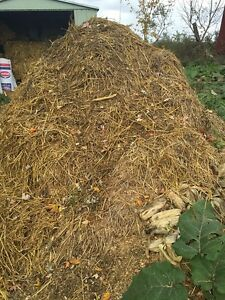 ***Rabbit Manure for sale!*** Perfect for Organic Gardens!!