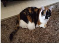 Missing tortoiseshell cat since Sunday 28th May in the Acocks Green area.