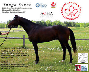 Stallion Standing at Stud also available for lease or sale.