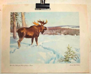 MOOSE PRINT  by CLARENCE TILLENIUS MONARCH from LIFE COLLECTION