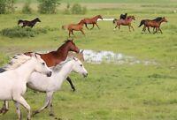 Horseback Riding Equestrian Lessons