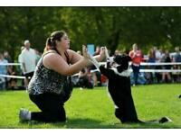 Buddy Pet care - dog training