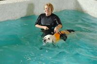 K-9 Rehab/Essex Animal Hospital - Dr. Janice Huntingford