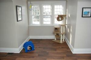 Cat Boarding with Your cats comfort in mind! London Ontario image 4