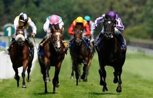 HORSE BETTING BETTING SERVICE >> More WINS for you!
