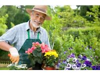 Part time gardener required for small garden and drive once a week - garden tidy and planting