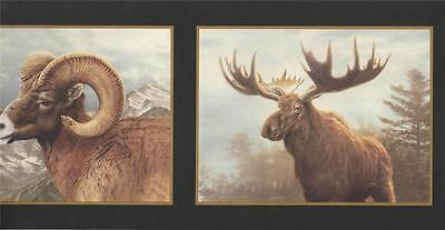 Wallpaper Border Hautman Brothers Ram Elk Deer Heads Framed in Gold and Black