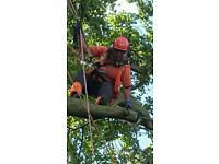 Tree removing service westmidland Birmingham