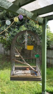 Ring neck parrot an cage Deception Bay Caboolture Area Preview