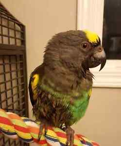 Mayors parrot