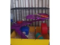 2 young Dwarf Hamsters and cage