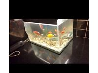 40L fish tank with 6 fish