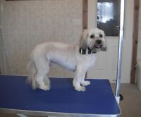 DOG GROOMING & BOARDING--STRATHROY
