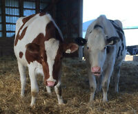 Dairy Farm Worker Required - Part-time