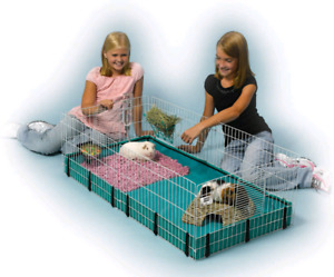 Selling pet accessories