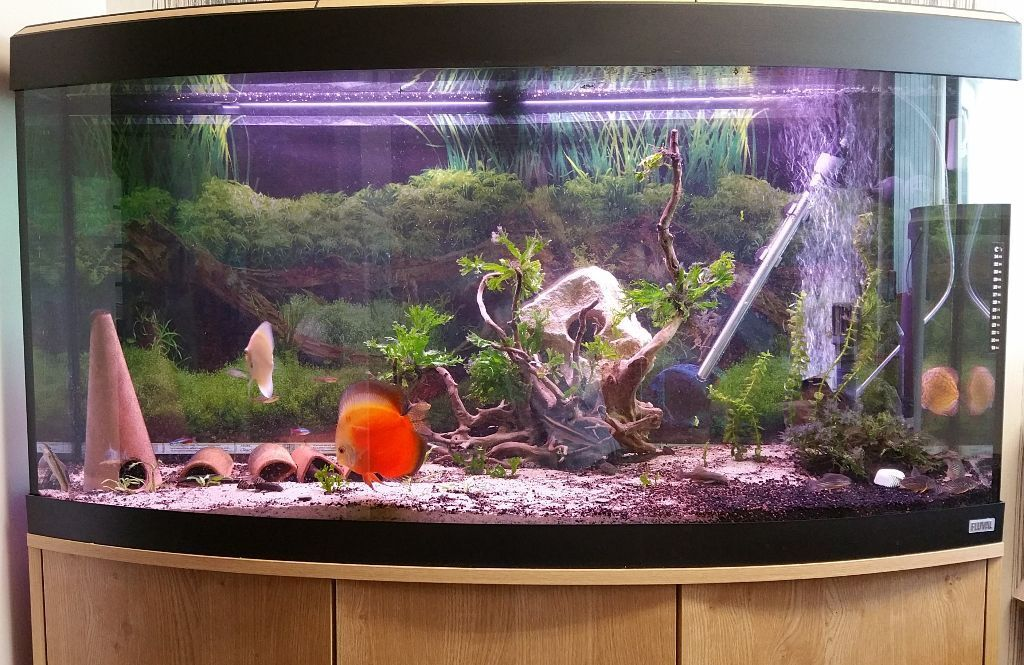 Fluval vicenza 260 bow fronted aquarium with fish very for Bow fish tank