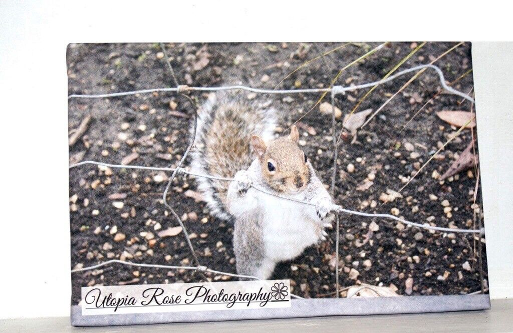 Beautiful Home Decor and Perfect Gifts for all occasions. Original Photographs on Canvas