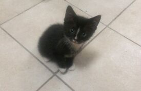 3 Black and white kittens for sale need a family