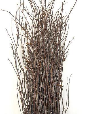Richland Natural Birch Branches 3 4Ft  25 Branches  Floral Arrangements Bouquet