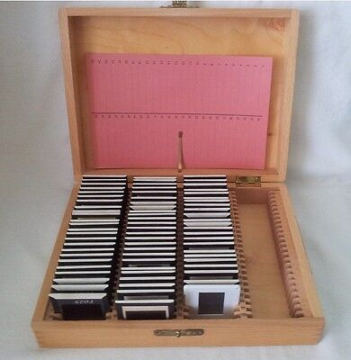 Dia Konvolut Diasammlung Farbdias mit Holzbox Kiste