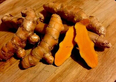 Turmeric Root, Organic, Fresh and grown In Hawaii. Free Shipping. 1/2 Pound.