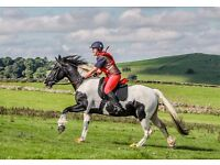 15.2hh 8 year old Coloured Gelding for Part-Loan