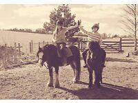 Horsey Help Required!!!