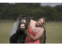 Freelance Horse Trainer - Hampshire Surrey and surrounding areas