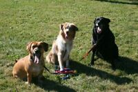 Fast and Fun Dog Training with a Certified Trainer!