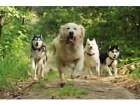 Pooch and Purr Pets, Dog walking and Pet sitting company, Staveley